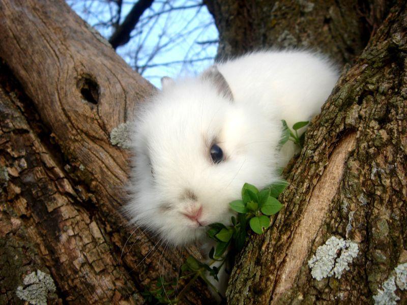 Animaux lapins gifs cliparts photos - Photo de lapin mignon ...