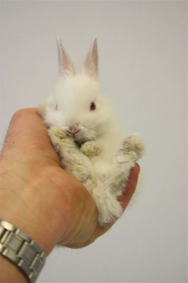 Tout petit lapin blanc petit lapin - Le petit lapin s est sauve dans le jardin ...